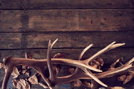 나무 배경에 마른 잎 사슴 뿔의 조성