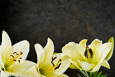 Border of pretty lemon yellow day lilies over a textured dark grey background with copy space