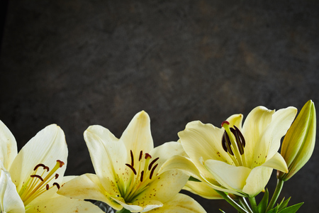 Lower border of fresh lemon yellow day lily flowers over a dark textured slate background with copy space Stock fotó
