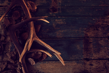 Deer antlers and fallen brown leaves against a rustic woodgrain background in a winter seasonal theme.