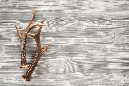 Een paar scherpe mannetjesgeweitakken op een rustieke, lege woodgrain achtergrond. Stockfoto