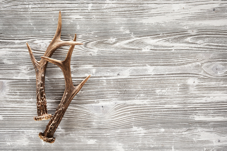 A pair of sharp stag antlers on a rustic, empty woodgrain background.