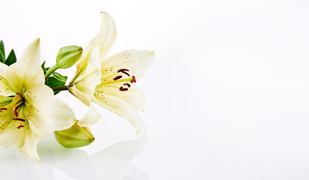 Small cut cluster of gorgeous lily flowers over white reflective background with copy space Stock fotó