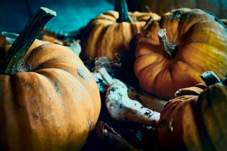 Halloween spooky theme of pumpkins among bones in close up Reklamní fotografie