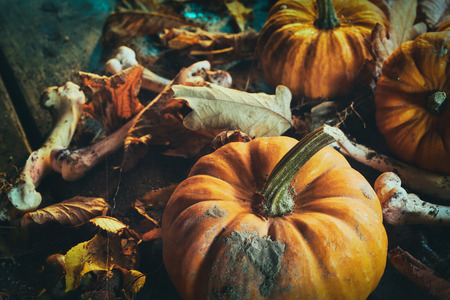 Halloween theme of pumpkins among dry autumn leaves with bones in close up Reklamní fotografie - 87253305