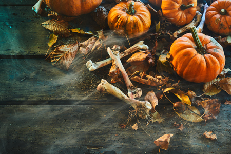 Halloween concept with dried bones and pumpkins surrounded by scattered fall leaves on rustic wood with copy space and cobwebs with smoky air