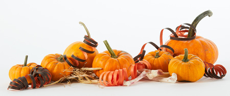 Festive party Halloween panorama banner with a still life of fresh autumn pumpkins decorated with streamers and scattered dried bones over white with copy space