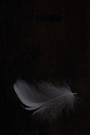 Light white feather against dark wooden background Stock Photo