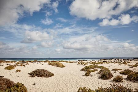 曇った青空の下で海の遠景を望むカナリア諸島ランゼロテの砂浜の沿岸植生のタソック