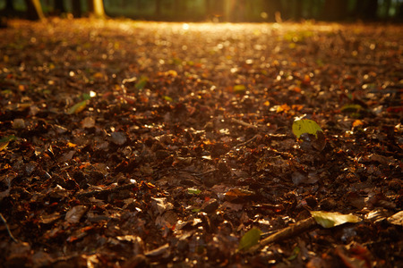 Low angle view of a beam of golden light shining on the ground back lighting fallen dead autumn leaves in an atmospheric background