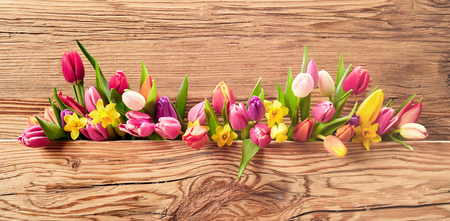 Fresh spring flowers with a mix of daffodils and tulips on a panoramic Easter banner with textured natural wood background and copy space