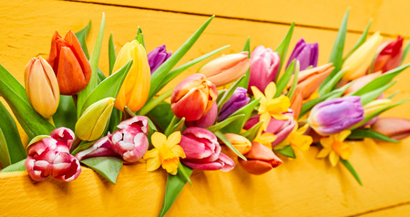 Colorful yellow banner with fresh spring flowers and green leaves colorful yellow banner with fresh spring flowers and green leaves with multicolored tulips and daffodils or mightylinksfo