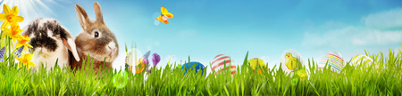 Happy Easter spring banner with two cute little bunnies, yellow daffodils and a butterfly in a spring meadow with green grass and a row of colorful Easter eggs for kids on a blue sky and copy space