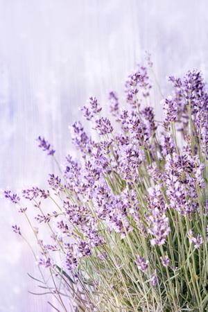 上のコピースペースを持つラベンダーの淡いモーヴや紫色のスプリグのかなり繊細な夏の背景