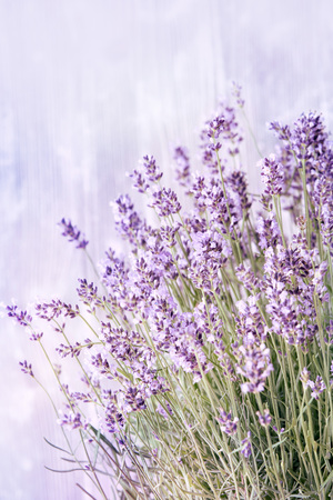 Pretty delicate summer background of pale mauve or purple sprigs of lavender with copy space above