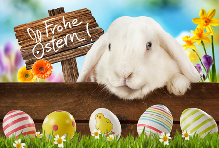 Colorful Easter background with cute white bunny rabbit peering over a rustic wooden fence in a spring meadow at decorated eggs and a sign in German Frohe Ostern or Happy Easter
