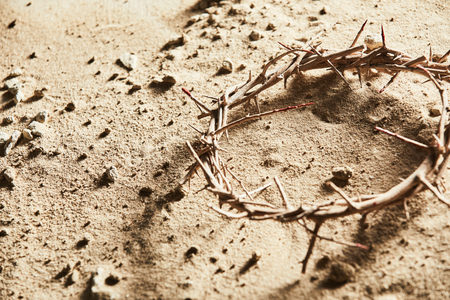 Crown of thorns lying on barren ground in close up view Stok Fotoğraf