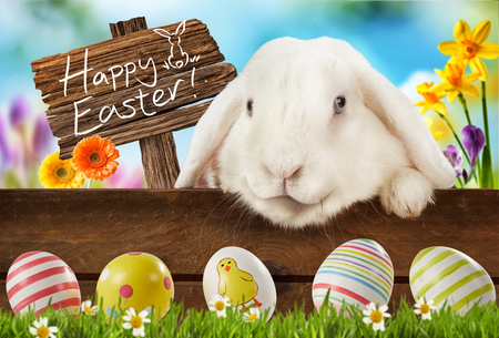 Happy Easter greeting card with an adorable white lop eared bunny in a meadow with spring flowers and a wooden sign - Happy Easter - looking down at colorful decorated eggs in the grass