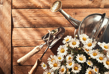 A gardening flat lay on a rustic wooden bench with daisy flowers, trowel and watering can. Imagens