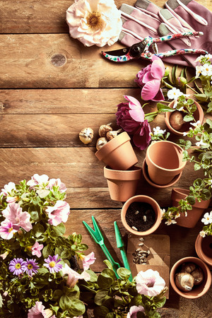 A gardening flat lay on rustic timber board with flowers, pots, bulbs and pruning equipment. Imagens