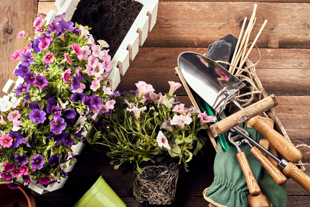 Flowers in box with gardening tools against wooden background