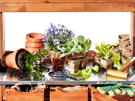 Gardening theme with flowers and tools on shelf