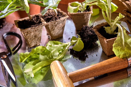 Close up view of planting seedlings in small cardboard pots Imagens