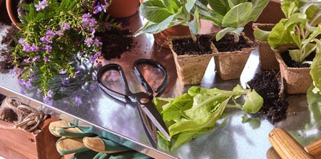 Flowers in pots with scissors and gardening tools on shelf