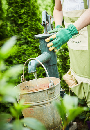Woman filling an old metal bucket with water at a vintage garden pump viewed through the greenery of a privet hedge in spring Reklamní fotografie