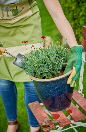 Woman transplanting ornamental flowers into a large blue ceramic flowerpot with a garden trowel in spring