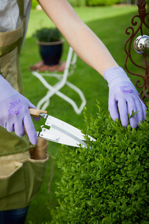 Anonymous person in gloves using sharp pruner and shaping green lush bush in summer garden