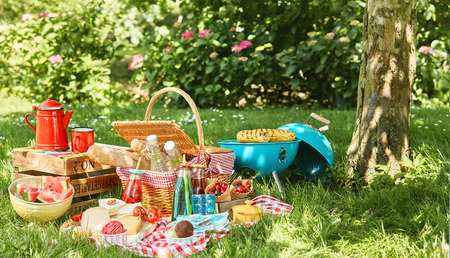 Small light blue grill and tree trunk next to picnic blanket with bushes in background while sun illuminates grass