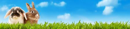 Brede panoramavaandel van twee schattige kleine konijnen die aan de zijkant staan in weelderige groene grazige weide onder een blauwe hemel met witte pluizige wolken en kopie ruimte conceptuele van Pasen en de lente