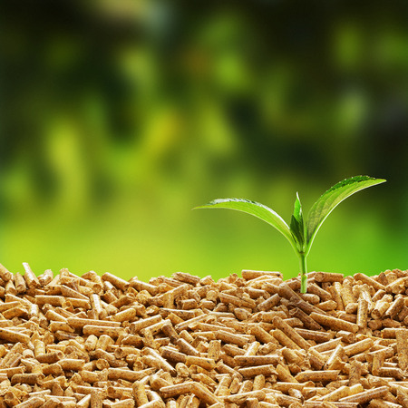 Fresh green seedling sprouting from wood pellets used as an organic mulch against a blurred green outdoor background with copy space