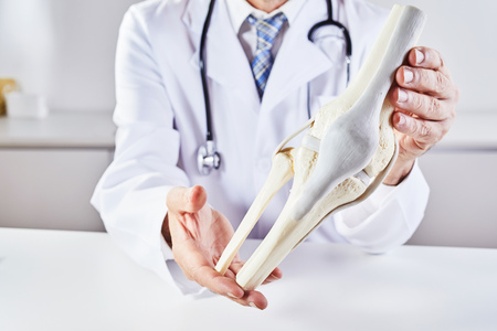 A male doctor with a stethoscope holding a model anatomy of a human knee bone.