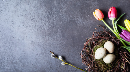 Eggs in decorative nest and flowers with copy space Easter spring concept, viewed from above on dark grey background