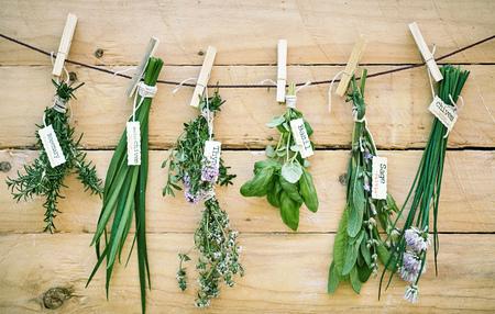 Assortiment de bouquets d'herbes fraîches avec des étiquettes de nom accrochées contre un mur en bois sur une ficelle avec du romarin, du basilic, du thym, de la sauge