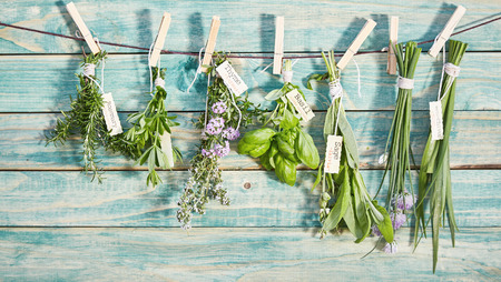 Banner of bunches of different named fresh herbs hanging on a line by wooden pegs over a rustic blue wood wall with copy space Banco de Imagens