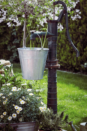 Garden landscaping with old cast iron water pump and galvanised bucket with fresh daisies growing in a metal tub below