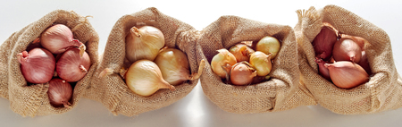 Row of open sack bags with different kinds of fresh onion from local market, viewed from above on white background