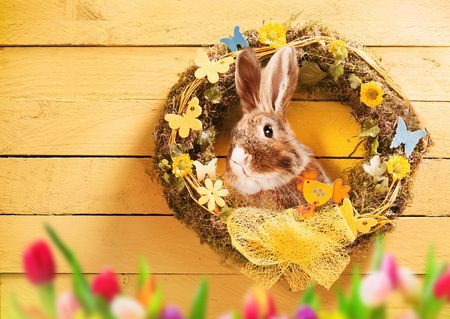 Easter  with handmade decorative circular wreath, colorful tulips border and bunny rabbit over a yellow rustic wooden wall with copy space