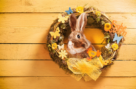 Decorative circular Easter wreath with bunny rabbit, spring flowers, butterfly, bow and text on yellow painted wooden wall with copy space for your holiday greeting Stock Photo