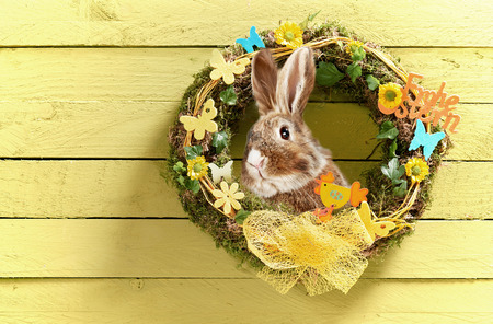 Colorful Easter card design with circular decorated spring wreath and cute little rabbit hanging on a yellow rustic wooden wall with copy space for your greeting