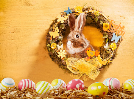 Happy Easter greeting card  with decorated spring wreath with flowers and butterflies with a cute rabbit peeking out and lower border of colorful Easter eggs on straw, copyspace on wood wall