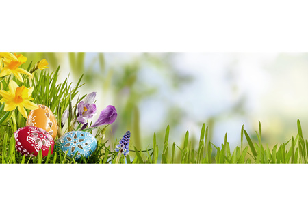 Bright fresh spring Easter banner with eggs nestling in green grass in a meadow with daffodils against a sunny sky with copy space for a holiday greeting