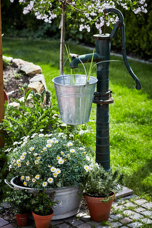 Vintage style garden landscaping in spring with a galvanised pail hanging from an old fashioned water pump amidst colorful flowers and daisies