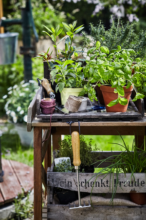 Garden work table with potted culinary herbs, balls of twine, rake and trowel in spring