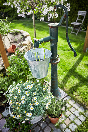 Retro style garden landscaping with old water pump and galvanised bucket and tub with a bush of white spring marguerite daisies and fresh herbs on a paved patio in a lush green lawn