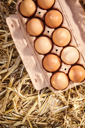 Cardboard carton filled with healthy brown free range eggs from the farm displayed on clean straw viewed from above with copy space