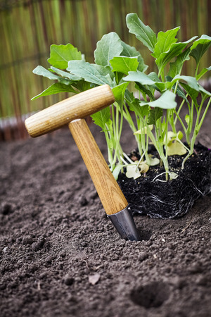 Small wooden handled augur for making holes in the earth to transplant nursery seedlings in a newly prepared flowerbed in close up view in spring Imagens